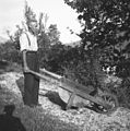 Barela (samokolnica) za gnoj, Staro selo 1951.jpg
