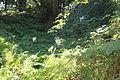Batumi Botanical Garden (37).jpg