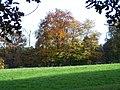 Baum im Herbstkleid - panoramio.jpg