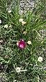 Beautiful assorted flowers on the Cimarron National Grassland - 2 (4d21620aaa104202bd21701c9fcdaaab).JPG
