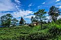 Beauty of ilam image 03.jpg