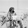 Bedoeïenenvrouw te midden van kudde dromedarissen, Bestanddeelnr 255-3417.jpg