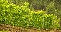 Beira, vinho verde.jpg
