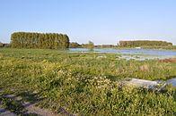 Bergenmeersen 1.jpg