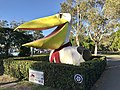Big Pelican in Noosaville, Queensland 01.jpg