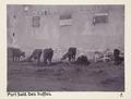 Bild från familjen von Hallwyls resa genom Egypten och Sudan, 5 november 1900 – 29 mars 1901 - Hallwylska museet - 91571.tif