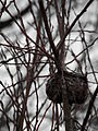 Bird Nest 01.jpg
