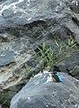 Bird on the rock! (5290684574).jpg