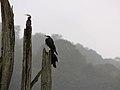 Birds (870321217).jpg