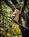 Birds - 28098705485.jpg