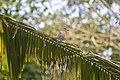 Birdtraveller.jpg