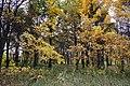Biryulyovskiy Arboretum 02.jpg