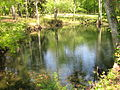 Blue Hole Springs in Florida Caverns State Park.JPG