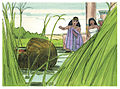 Book of Exodus Chapter 3-5 (Bible Illustrations by Sweet Media).jpg