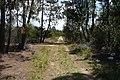 Bosque en Laguna del Cisne - panoramio.jpg