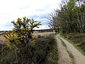 Bosrand Posbankheide - panoramio.jpg