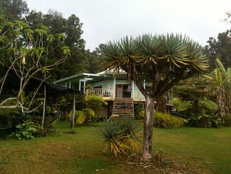 Terence McKenna - Botanical Dimensions ethnobotanical preserve in Hawaii.