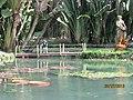 Botanical Garden - panoramio (6).jpg