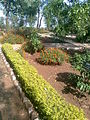 Botanical Garden Toranmal.jpg