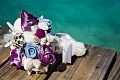 Bouquetiere Turks Caicos-86.JPG