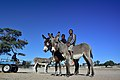 Boys on donkeys, Andriesvale, Kalahari, Northern Cape, South Africa (20350284550).jpg