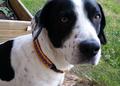 Bracelet de survie utilisé en collier pour chien.png