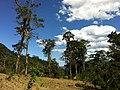 Brasil Rural - panoramio (38).jpg