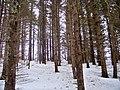 Breadalbane Hiking Trail, PEI (6807920932).jpg
