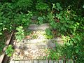 Briant Park Summit NJ June 2012 overgrown train track 3.jpg