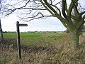 Bridleway (green lane^) - geograph.org.uk - 119256.jpg