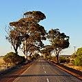 Bruce Rock-Merredin Road, 2014(4).JPG