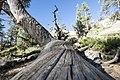 Bryce Canyon (15201850158).jpg