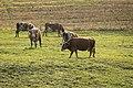 Budurleni - Bistrita-Nasaud (5107736071).jpg