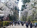 Bukeyashiki Street in Kakunodate 20180428d.jpg