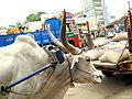 Bullock cart!.JPG