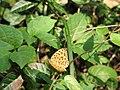 Butterfly at the Sun Yatsen Memorial, Nanjing 2006.JPG