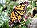 Butterfly butterflies flowers leaves.jpg