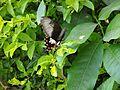 Butterfly flying.jpg