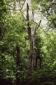 Bychok trees.jpg