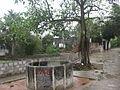 Cây đa, giếng nước làng Tuyên Hóa.jpg