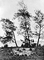 COLLECTIE TROPENMUSEUM Strandwal met casuarina equisetifolia Forst en Pandanus tectorius sol TMnr 10006178.jpg