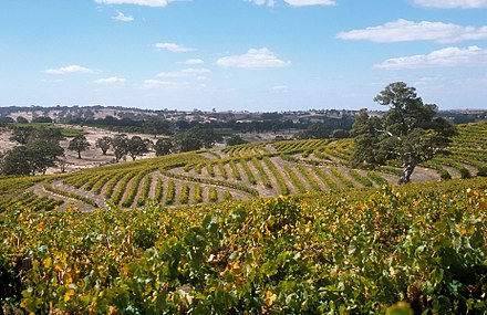 Vineyard in Eden Valley. South Australia's wine industry is the largest in Australia. CSIRO ScienceImage 4714 CSIRO Precision Viticulture Trial site in the Eden Valley SA March 2004.jpg