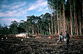 CSIRO ScienceImage 640 Experimental Treatments for Plantation.jpg