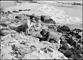 Caesarea. (Kaisarieh). The Bay. Drink of sweet water directly at the sea's edge LOC matpc.18519.jpg