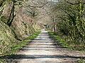 Camel trail Feb2008.JPG