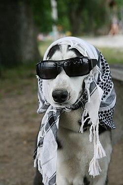 Canis lupus familiaris disguised