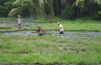 Surigao del Sur - Ricefield in Cantilan