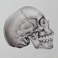 Carbon Dust Skull.jpg