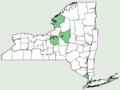 Carex aggregata NY-dist-map.png