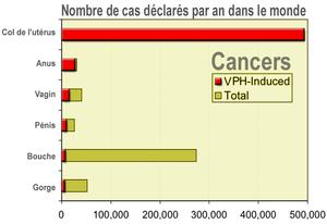 Papillomavirus humain — Wikipédia